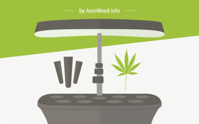 How to Grow Weed in Your AeroGarden