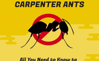 Carpenter Ants – All You Need to Know to Deal With Them