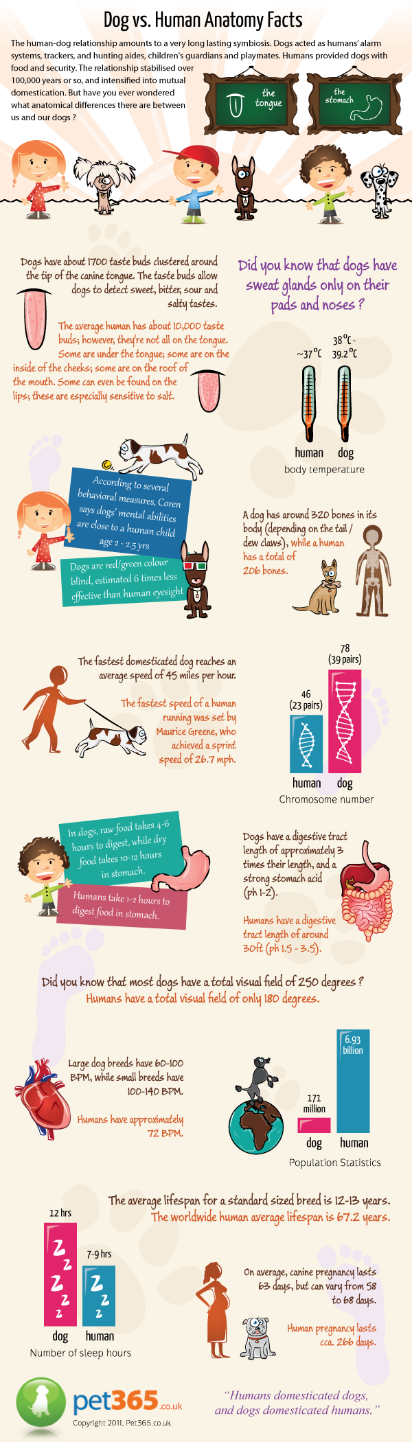 Dog vs Human Anatomy Facts [Infographic]