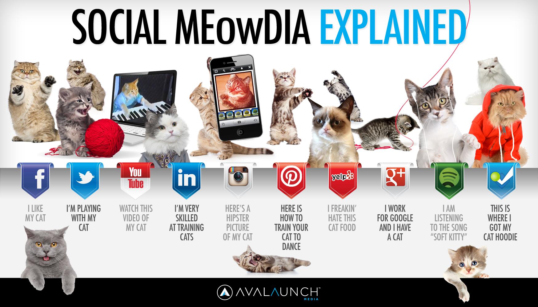 Social MEowDia Explained