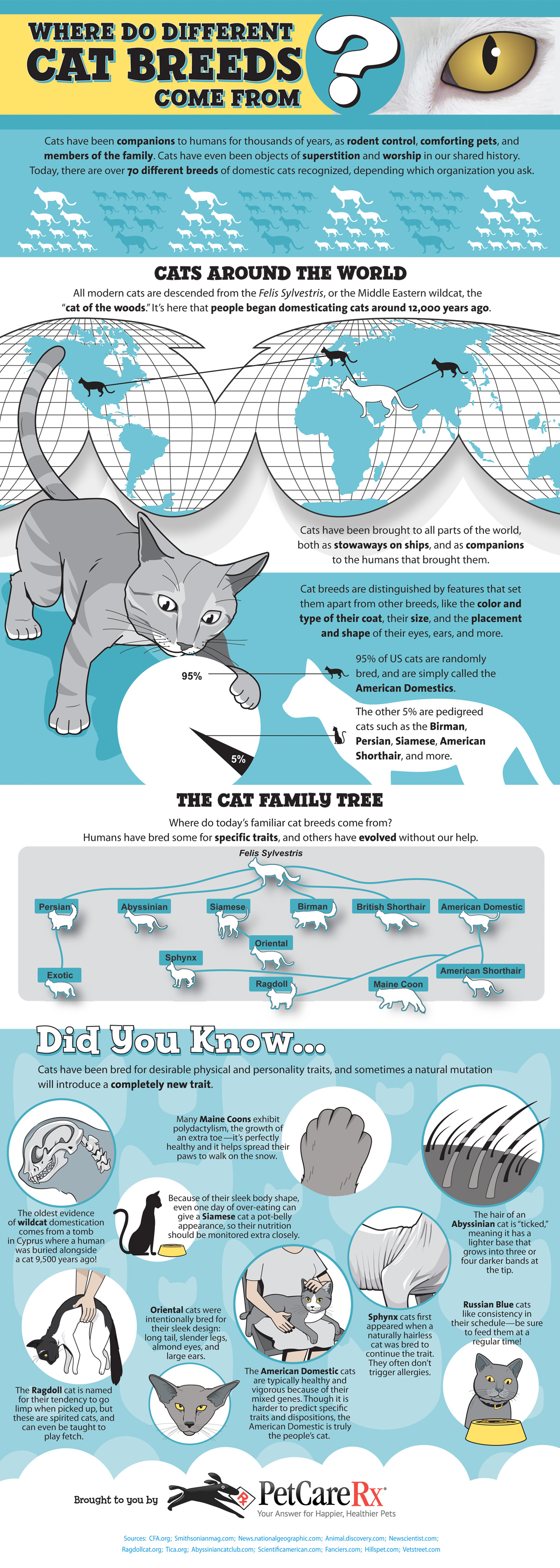 Where Cat Breeds Come From