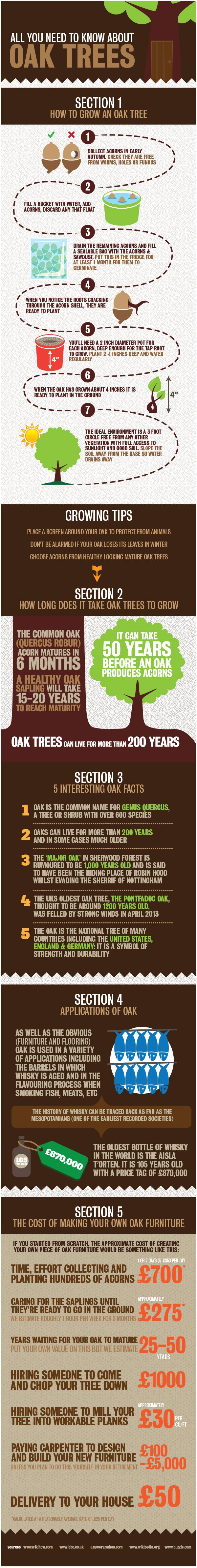 All You Need To Know About Oak