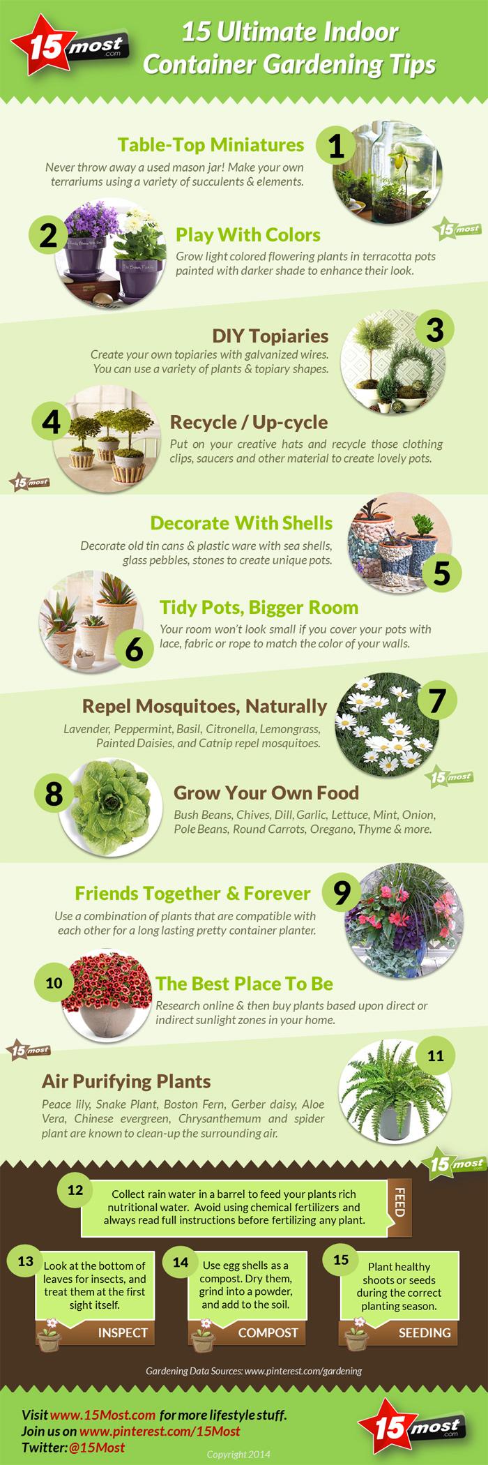 15 Ultimate Indoor Container Gardening Tips