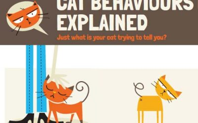 Cat Behaviors Explained