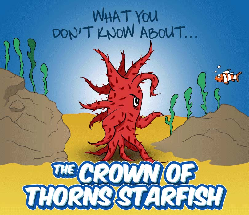 The Crown Of Thorns Starfish Outbreak Infographic The trading card is titled crown of thorns starfish. the crown of thorns starfish outbreak