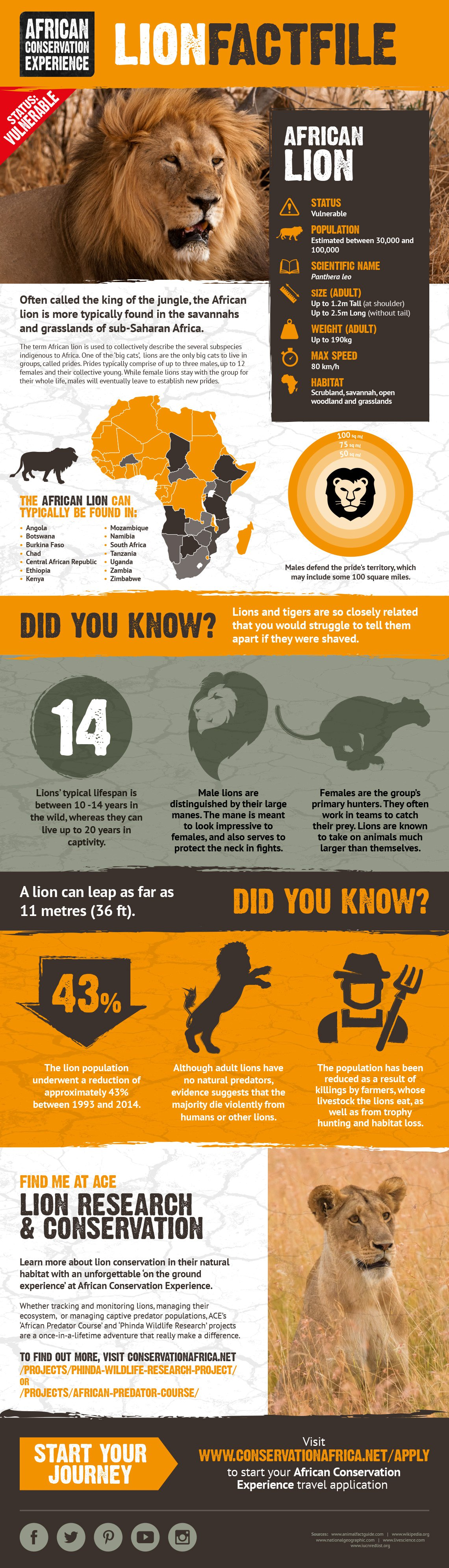 Rip Roaring Facts About The African Lion