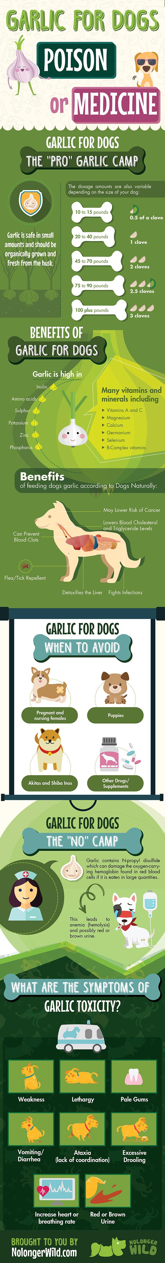 Garlic for Dogs: Poison or Medicine?