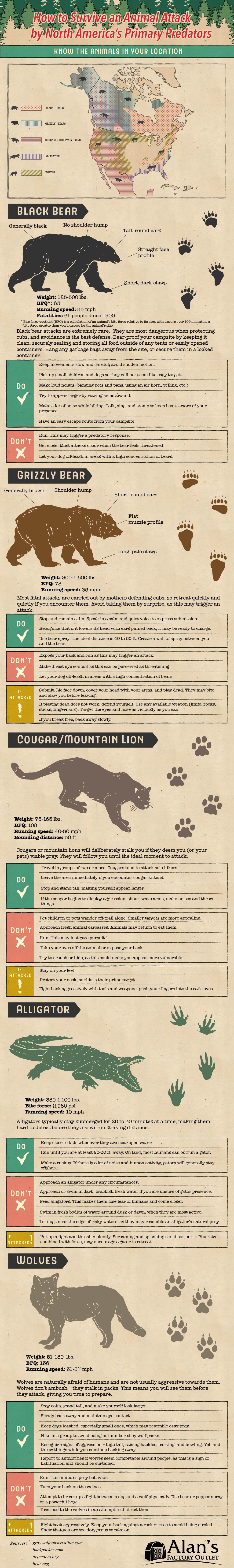 How to Survive an Animal Attack by North America's Primary Predators