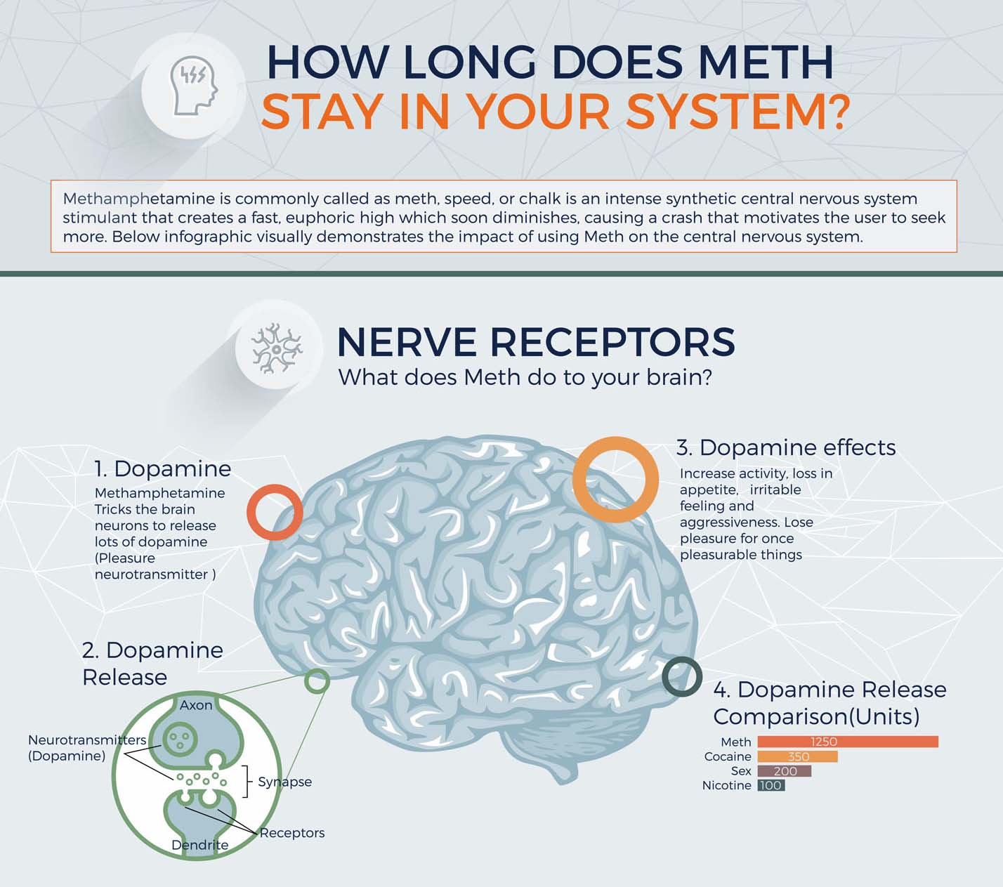 How Long Does Meth Stay In Your System [Infographic]
