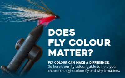 Does Fly Color Matter?