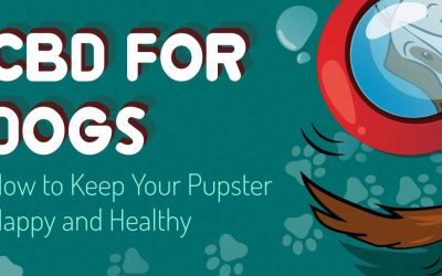 CBD for Dogs: How to Keep Your Puppster Happy and Healthy