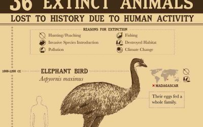 36 Extinct Animals Lost to History Due to Human Activity