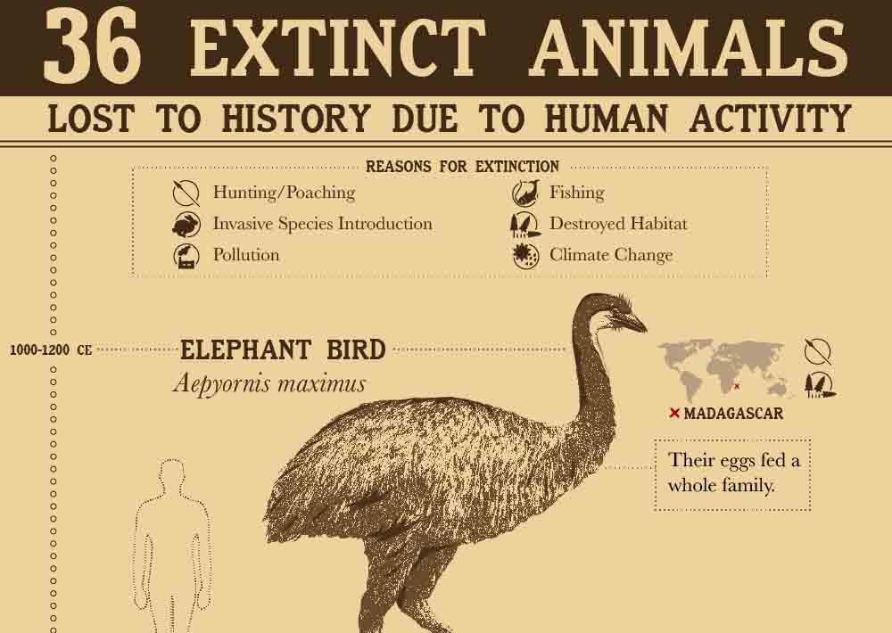 animals extinct