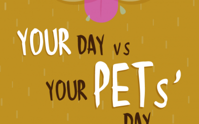 Your Day VS Your Pets' Day