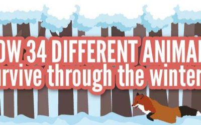 How 34 Different Animals Survive Through the Winter