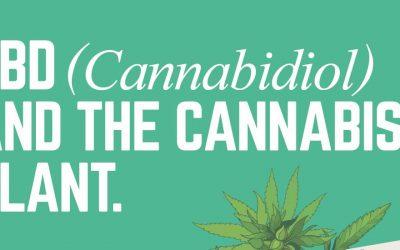 CBD and the Cannabis Plant