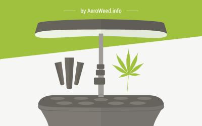 How to Grow Weed in Your AeroGarden