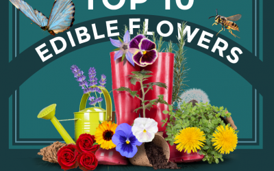 Top 10 Edible Flowers