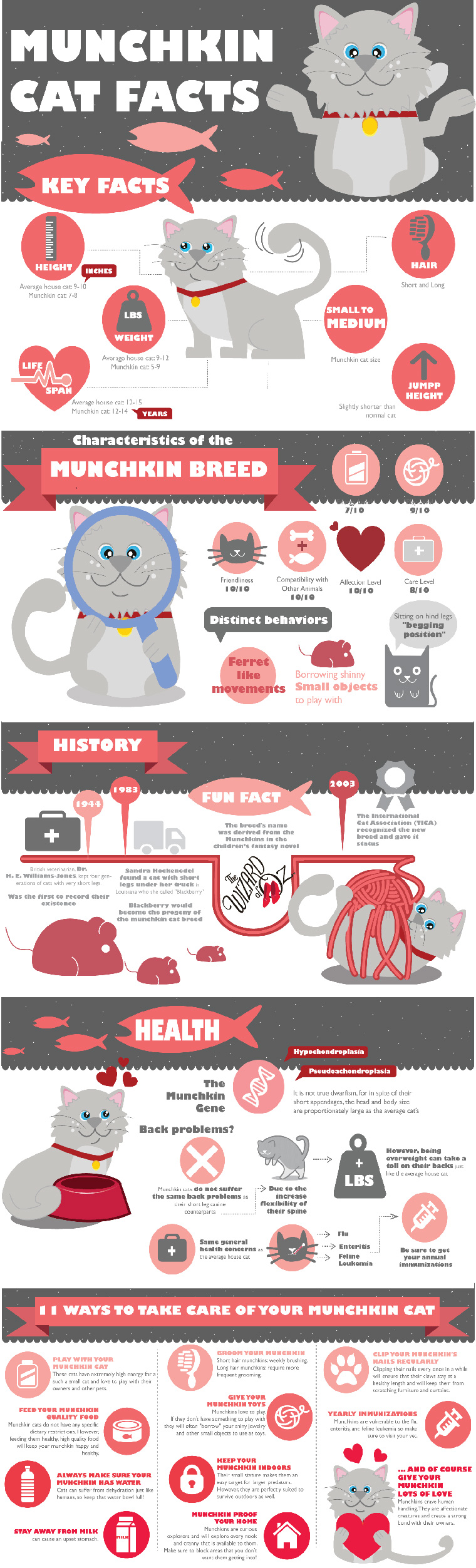 What is a Munchkin Cat?
