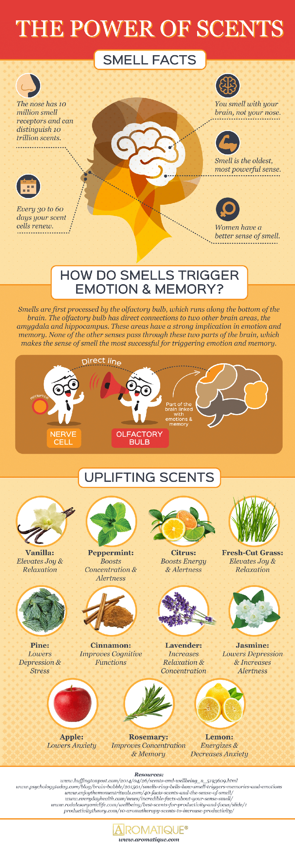 The Power of Scent: Smell Facts