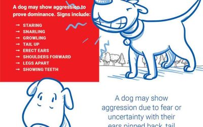 Dog Park Safety: How to Spot Aggressive Dogs