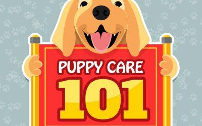 Puppy Care 101