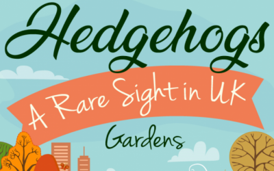 Hedgehogs – A Rare Sight in UK Gardens