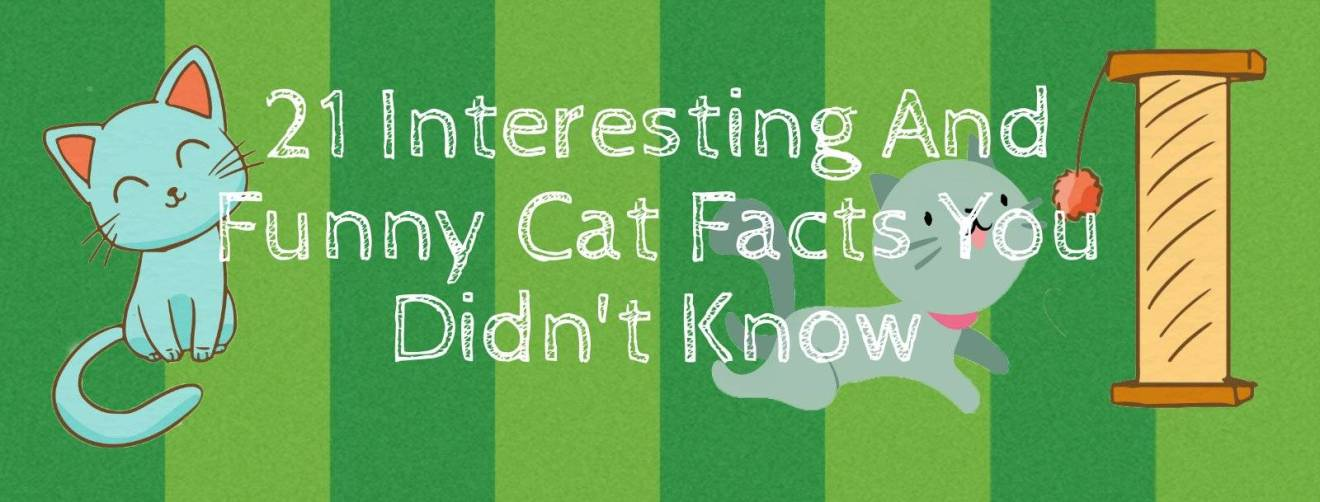 21 Interesting & Funny Cat Facts