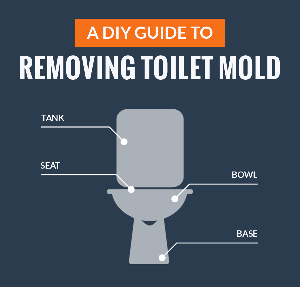 DIY Guide To Removing Toilet Mold