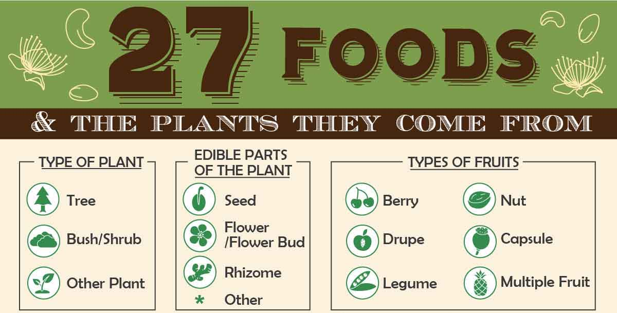 27 Foods and the Plants They Come From