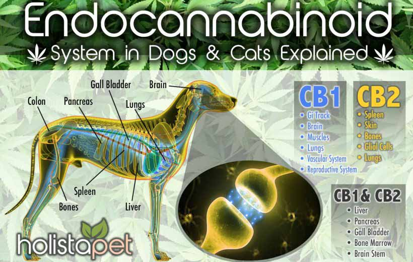 The Endocannabinoid System in Dogs & Cats Explained