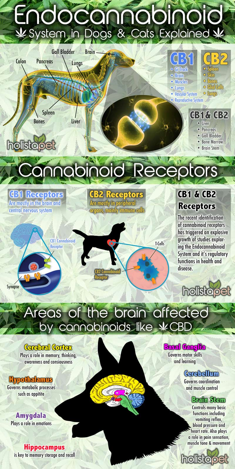 Do dogs have an endocannabinoid system