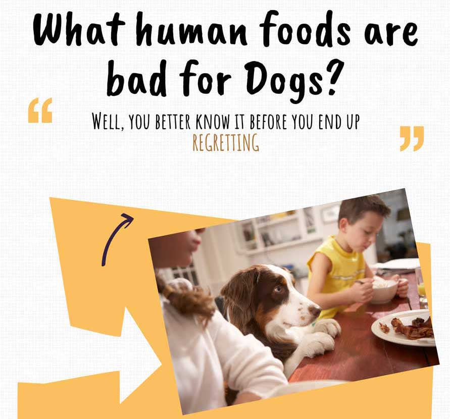 What Human Foods are Bad for Dogs?