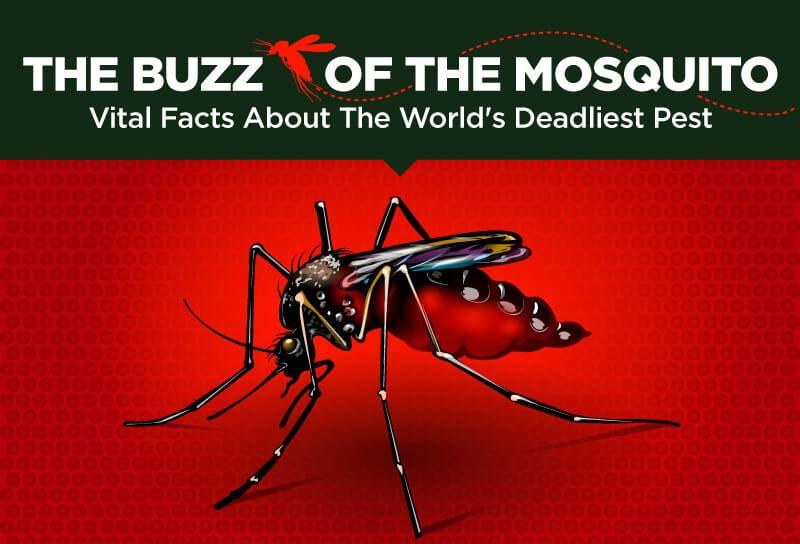 The Buzz of the Mosquito
