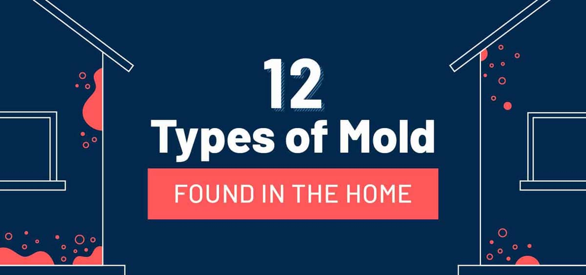 12 Common Types of Mold Hiding in the Home
