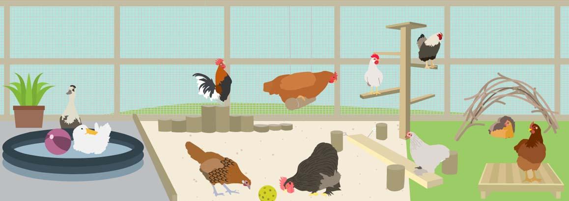 Environmental Enrichment Ideas for Poultry