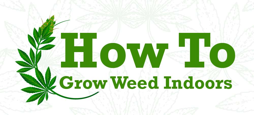 Beginner's Guide To Growing Weed Indoors