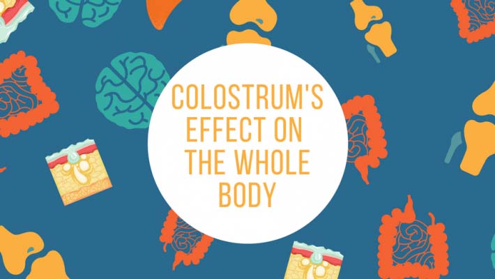 Colostrum's Effect on the Whole Body