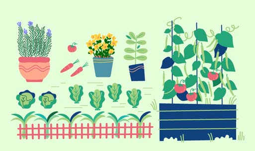 What To Plant When: Planting Calendar