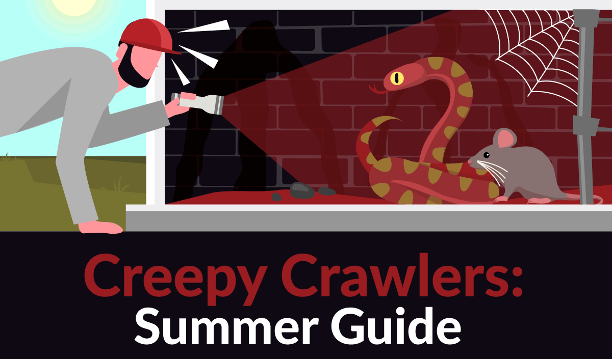 The Ultimate Guide for Dealing with Summer Pests