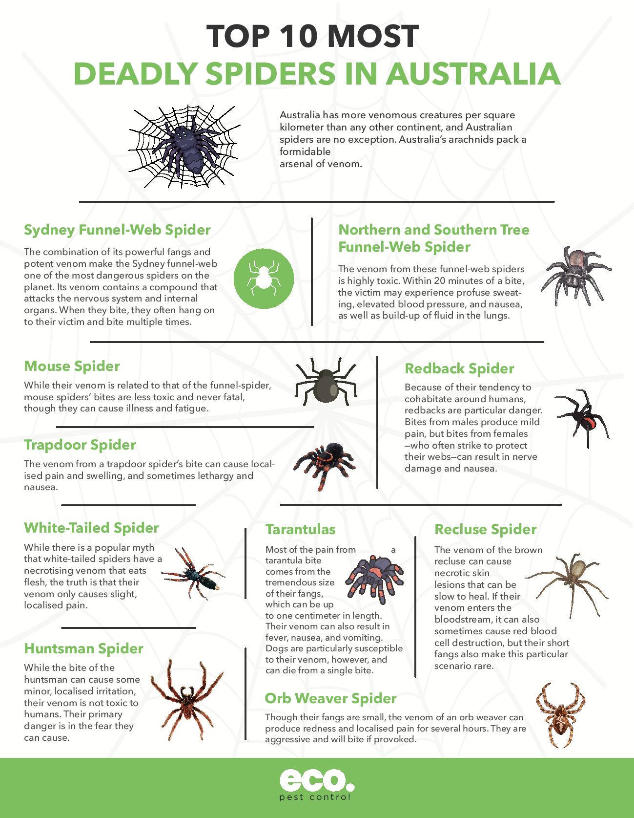 Top 10 Most Deadly Spiders in Australia