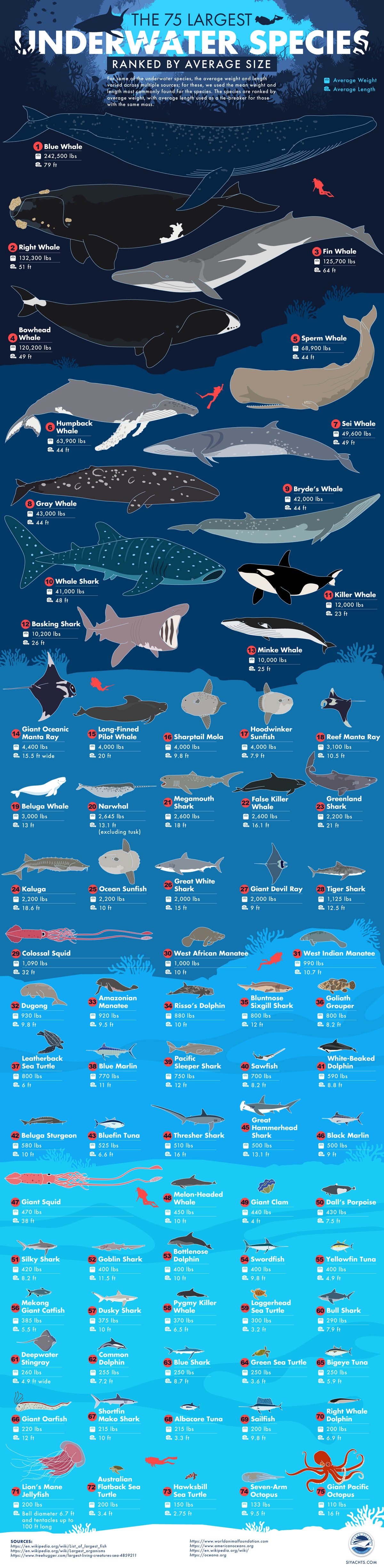 The 75 Largest Underwater Species Ranked by Average Size