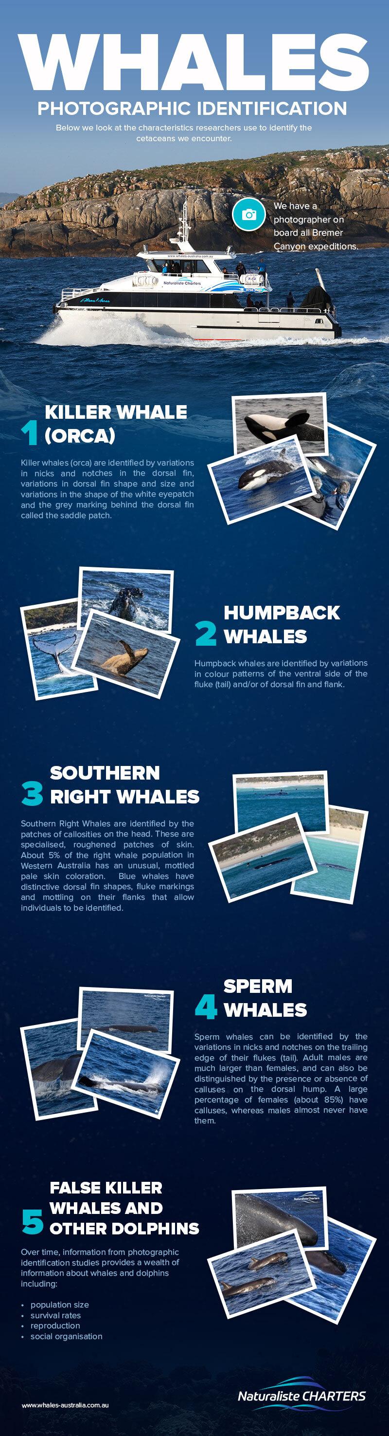Whales Photographic Identification