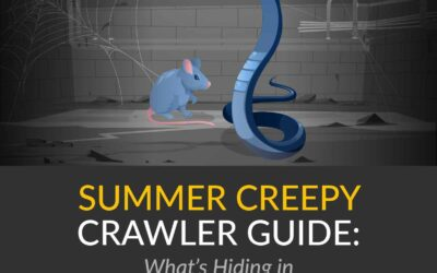 Summer Creepy Crawler Guide: What's Hiding in My Home's Crawl Space?